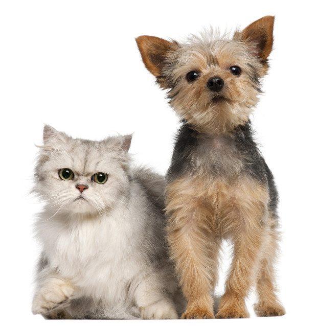 cachorro-gato-materia