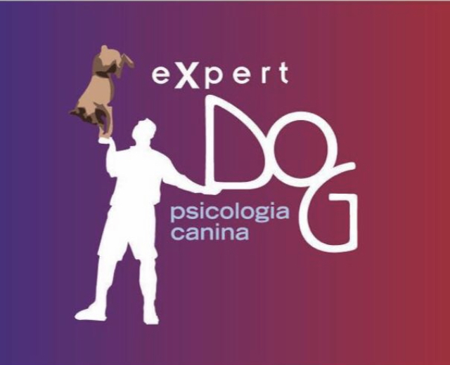 expert_dog